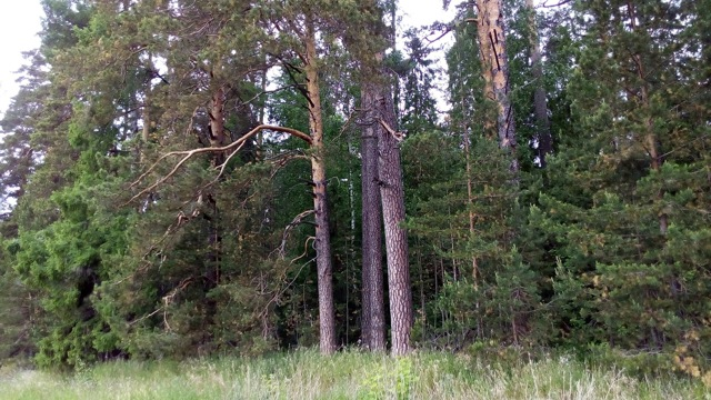 100 кубов леса от государства: закон